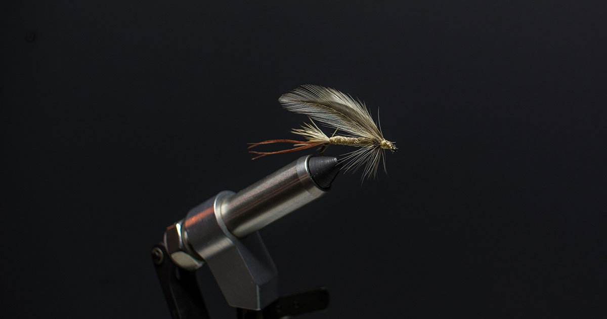 Sound like a pro: fly fishing terms to know
