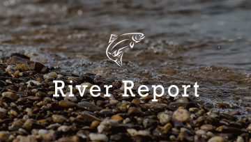 Yellowstone River Report 4/8/2017