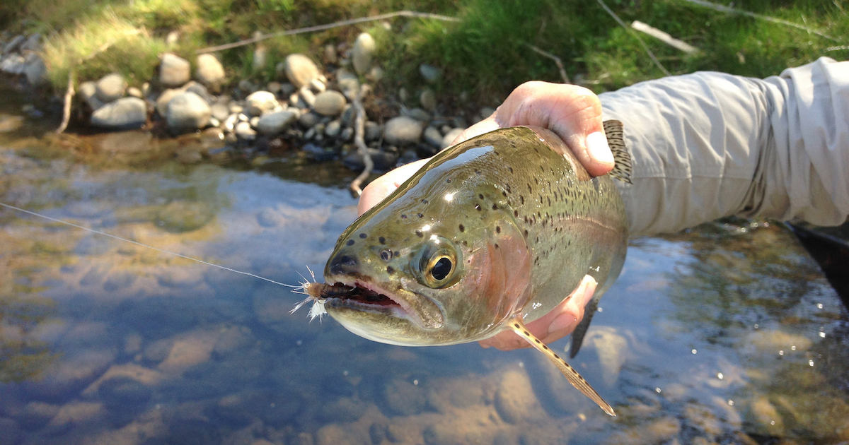 5 reasons why montana has the best fly fishing for Private trout fishing in missouri