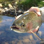 Fly Fishing Hooks And How To Choose The Right One