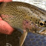 Your Guide To The Best Stillwater River Fishing Access Map